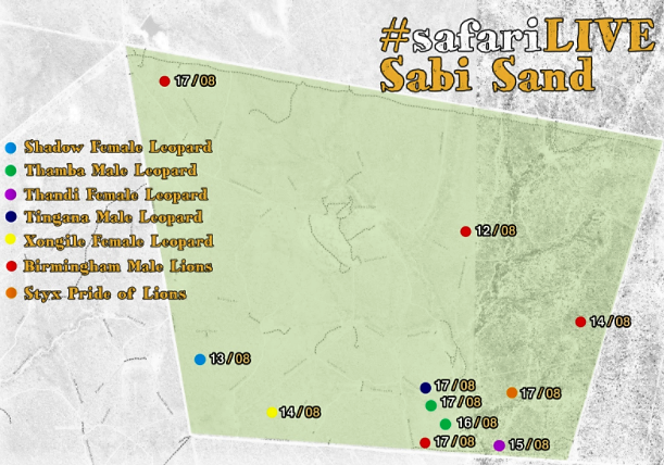 Sabi Sand cat character locations