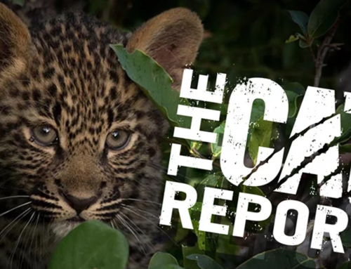 The Cat Report – Episode Two released, Episode One now available to sample for free