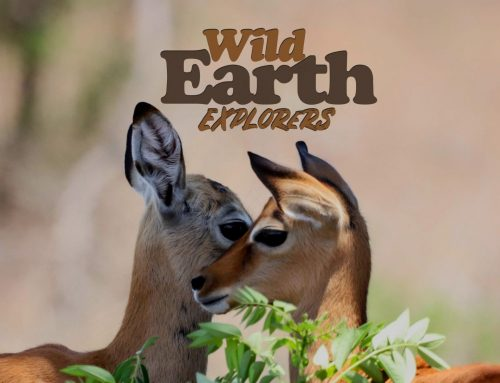 We are launching the WildEarth Explorers programme!