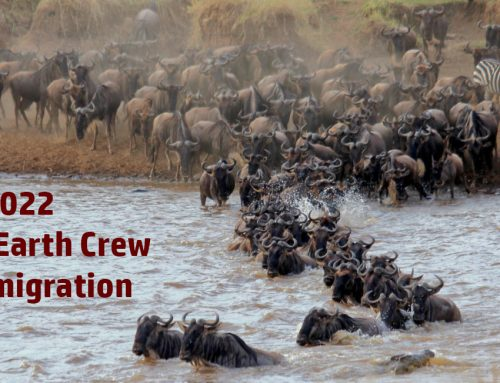 Join the WildEarth crew in the Mara during the 2022 migration